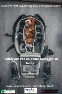 Pet calendar Competition